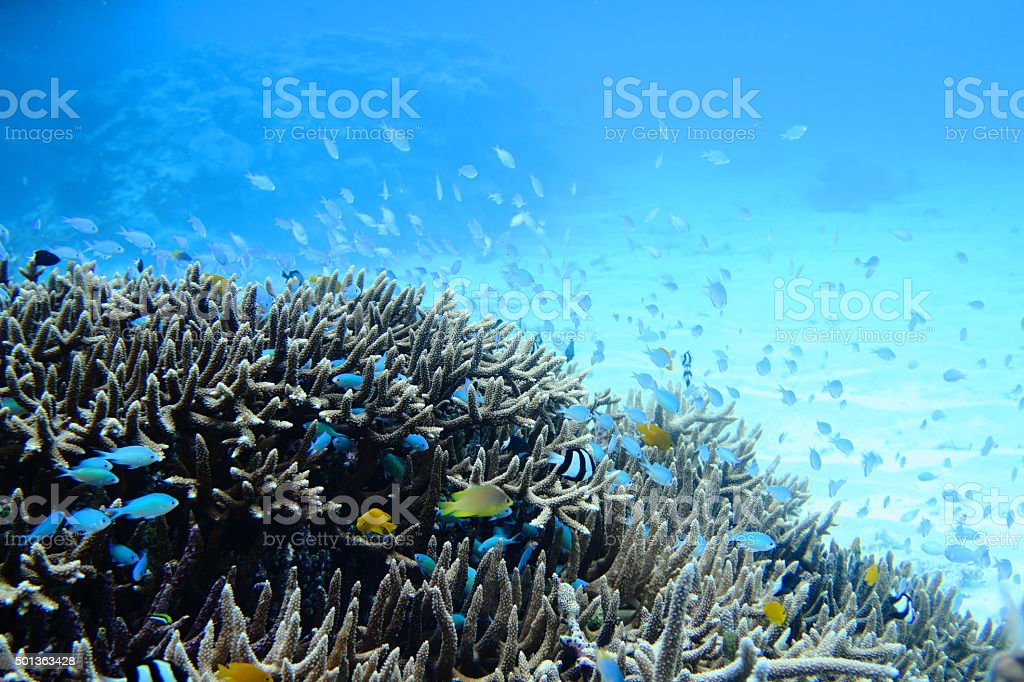 Tropical fish that swim in the coral reef stock photo
