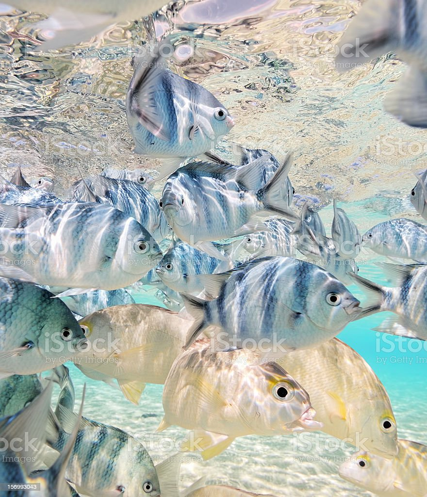 tropical fishes in crystal clear water stock photo