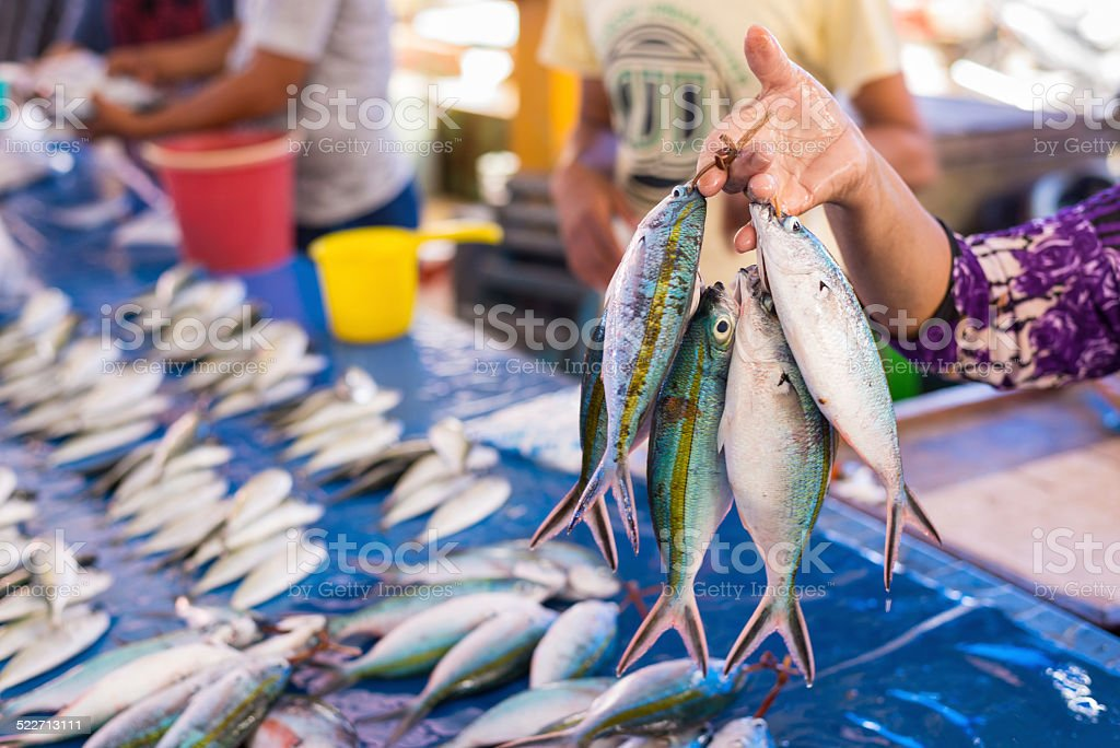 Tropical fishes on sell stock photo