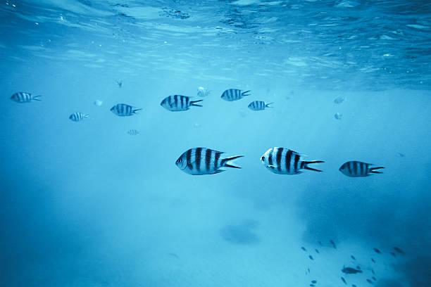 pesci tropicali - fondale marino foto e immagini stock