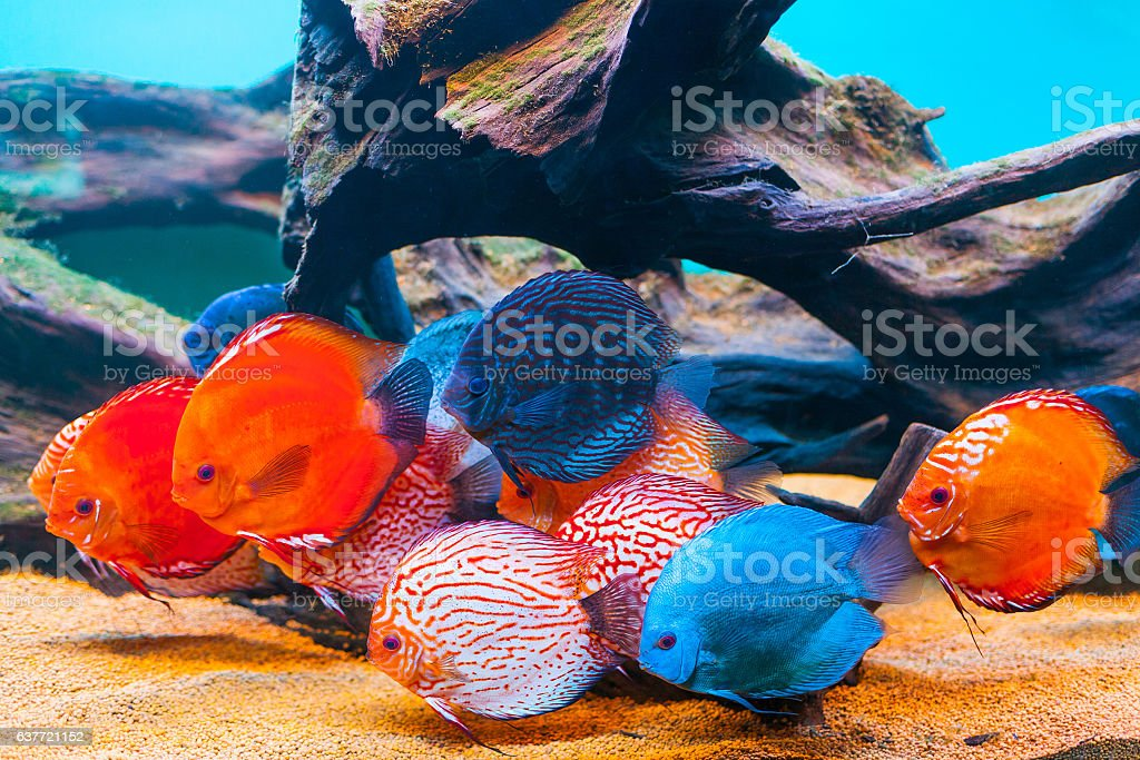 Poissons tropicaux  - Photo