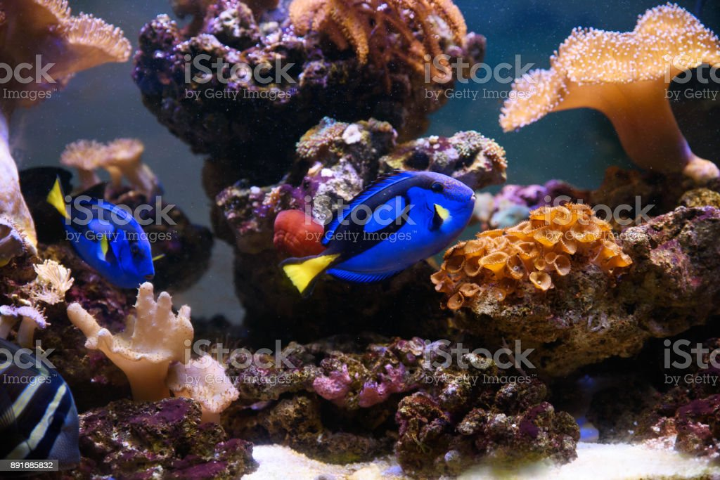 Tropical fishes swimming between corals stock photo