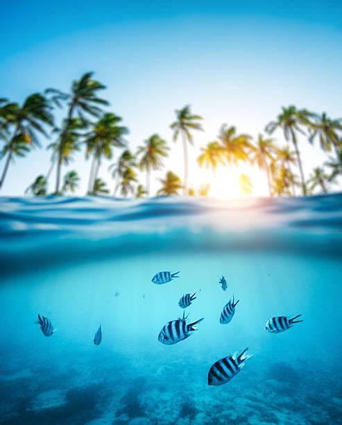 pesci tropicali sott'acqua - under the sea fish foto e immagini stock