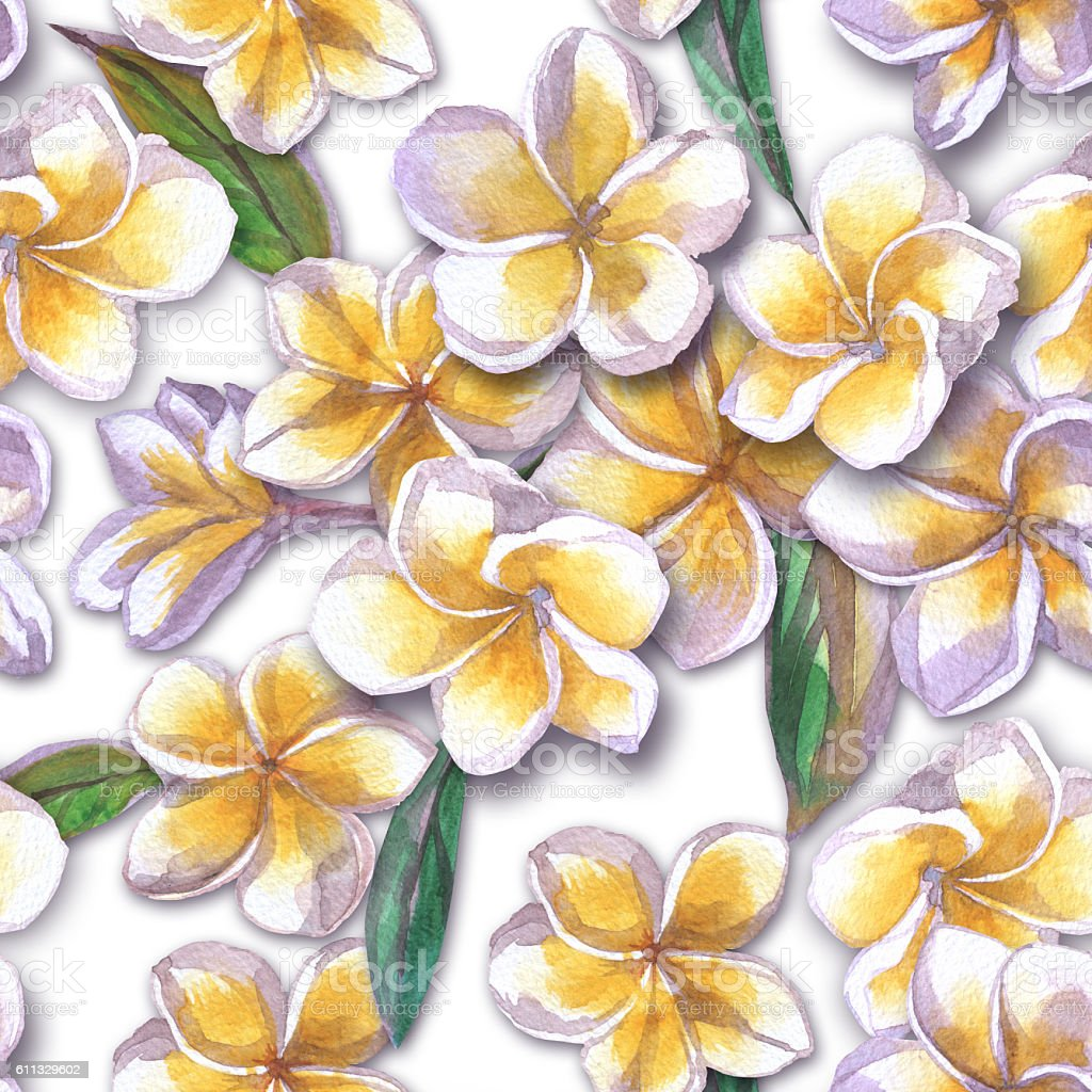 Tropical floral pattern watercolor flowers plumeria. White flower frangipani repeating. stock photo