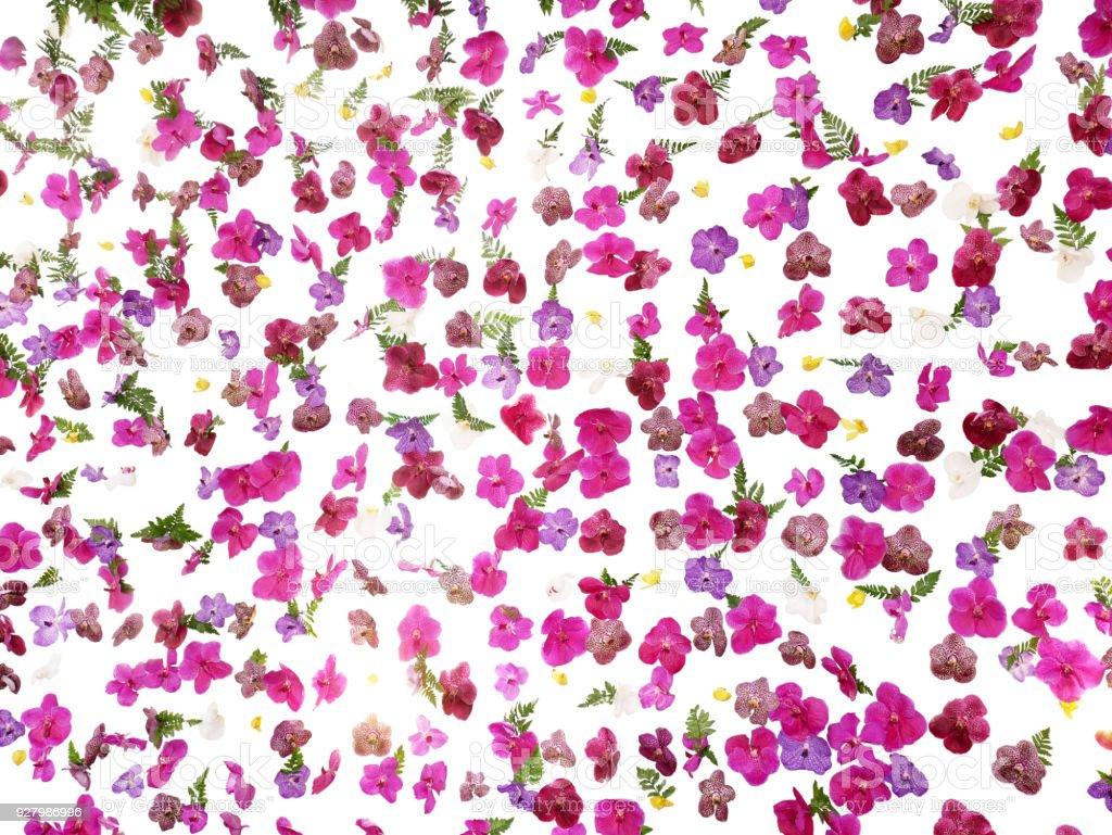 Patrón Floral Tropical Boda Telón De Fondo Hermosas Flores De ...