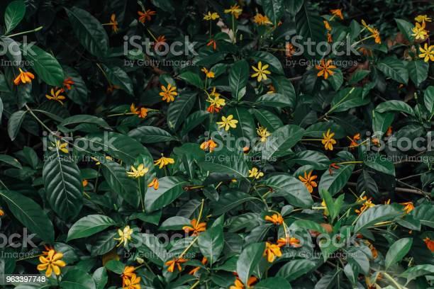 Tropikalny Kwiat Na Tle - zdjęcia stockowe i więcej obrazów Bez ludzi