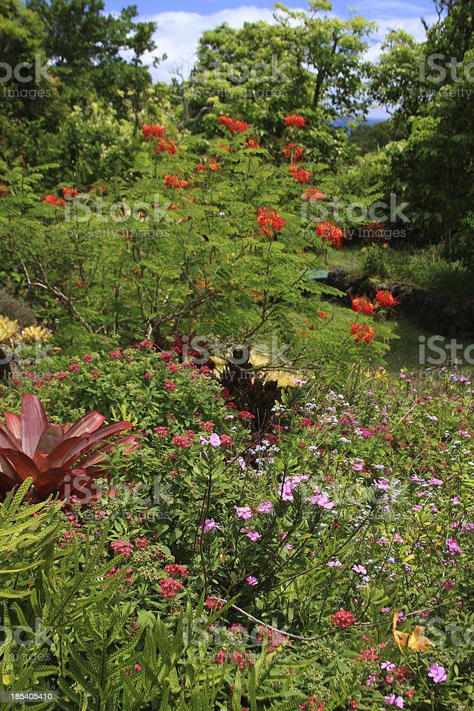 Tropical flower garden on Kauai Hawaii stock photo