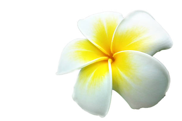 royalty free tropical flowers pictures images and stock photos istock
