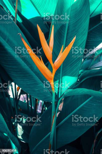 Tropical flower picture id936352414?b=1&k=6&m=936352414&s=612x612&h=dulcbdqddwl5jlpk8zwmfl0jqzby4gftupd27qpwqcg=