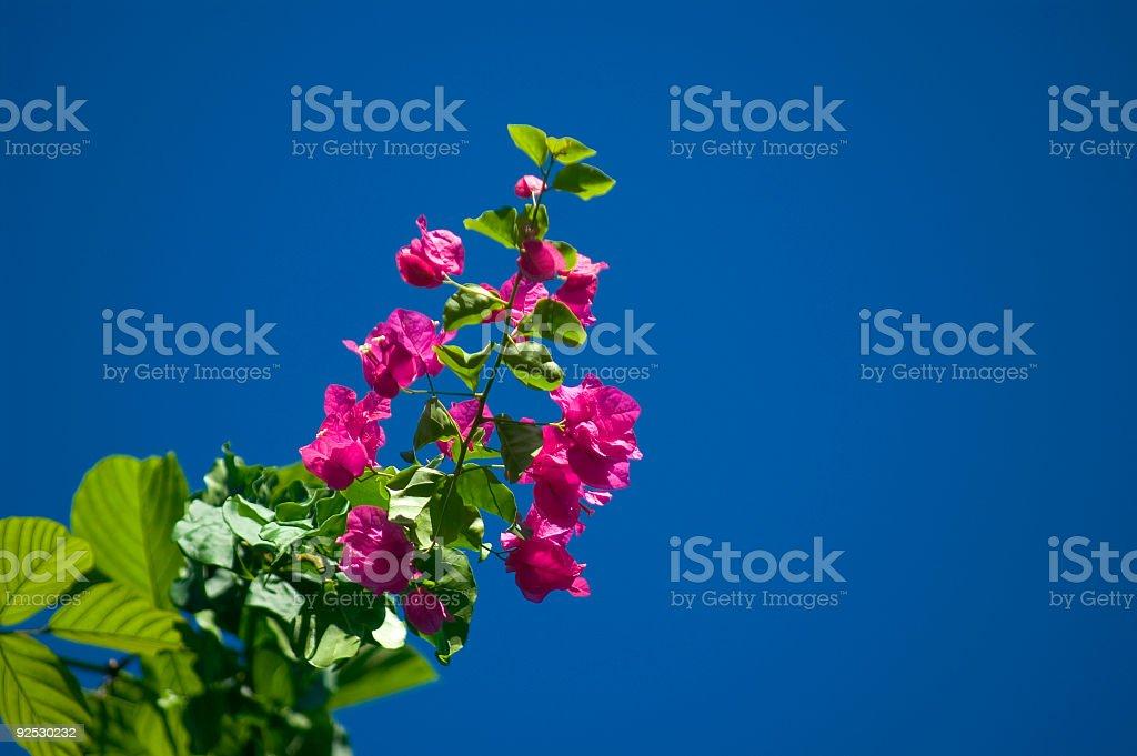 Tropical Flower Tree stock photo