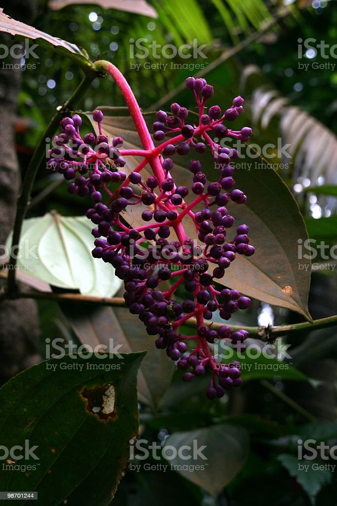 Tropical Flowerpart royalty-free stock photo