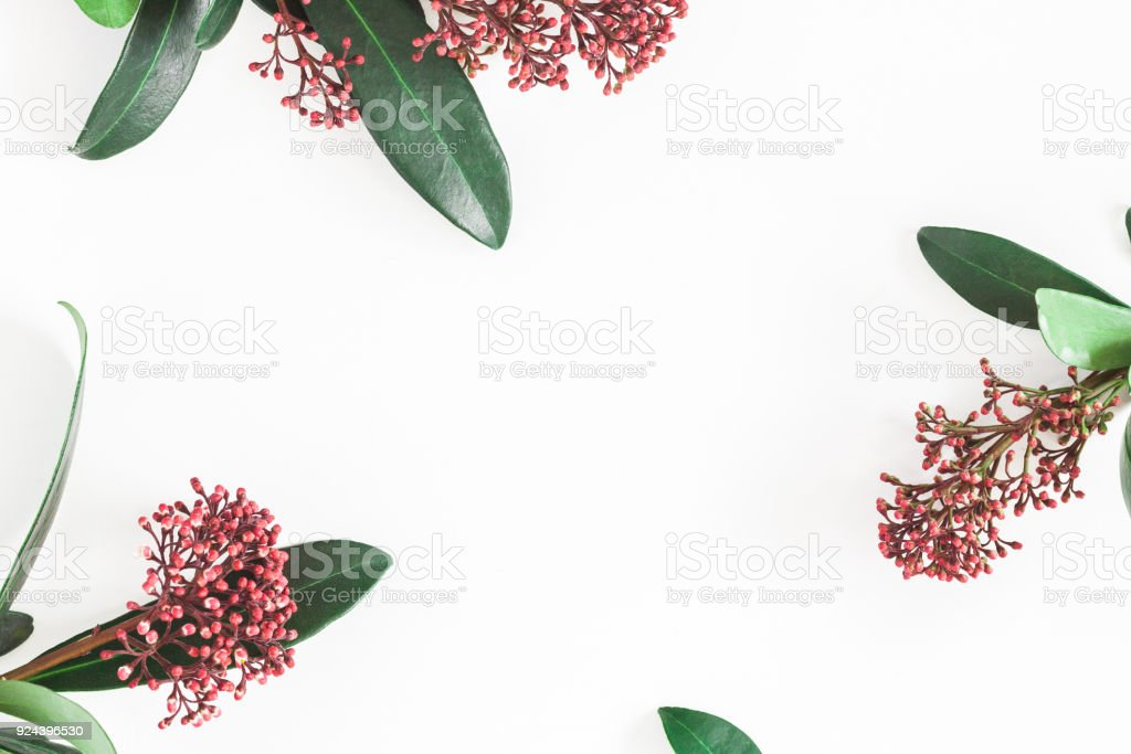 Tropical flowers leaves on white background. Flat lay, top view stock photo