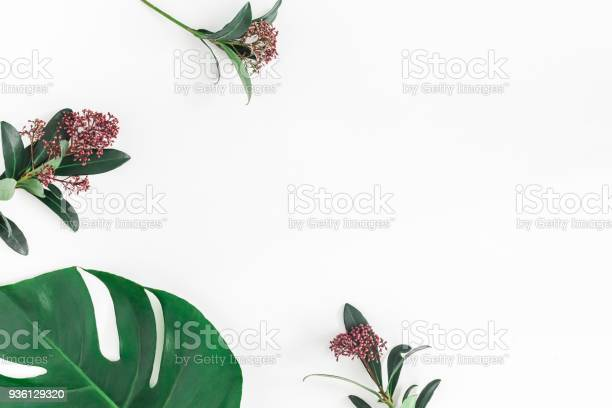 Tropical flowers leaves on white background flat lay top view picture id936129320?b=1&k=6&m=936129320&s=612x612&h=s9t 2a 1ivosaxzhh4knmbt25zujdz2xkbctluzbbmy=