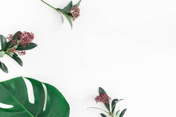 熱帶花卉在白色背景上留下。平躺, 頂部視圖 - 熱帶式樣 個照片及圖片檔
