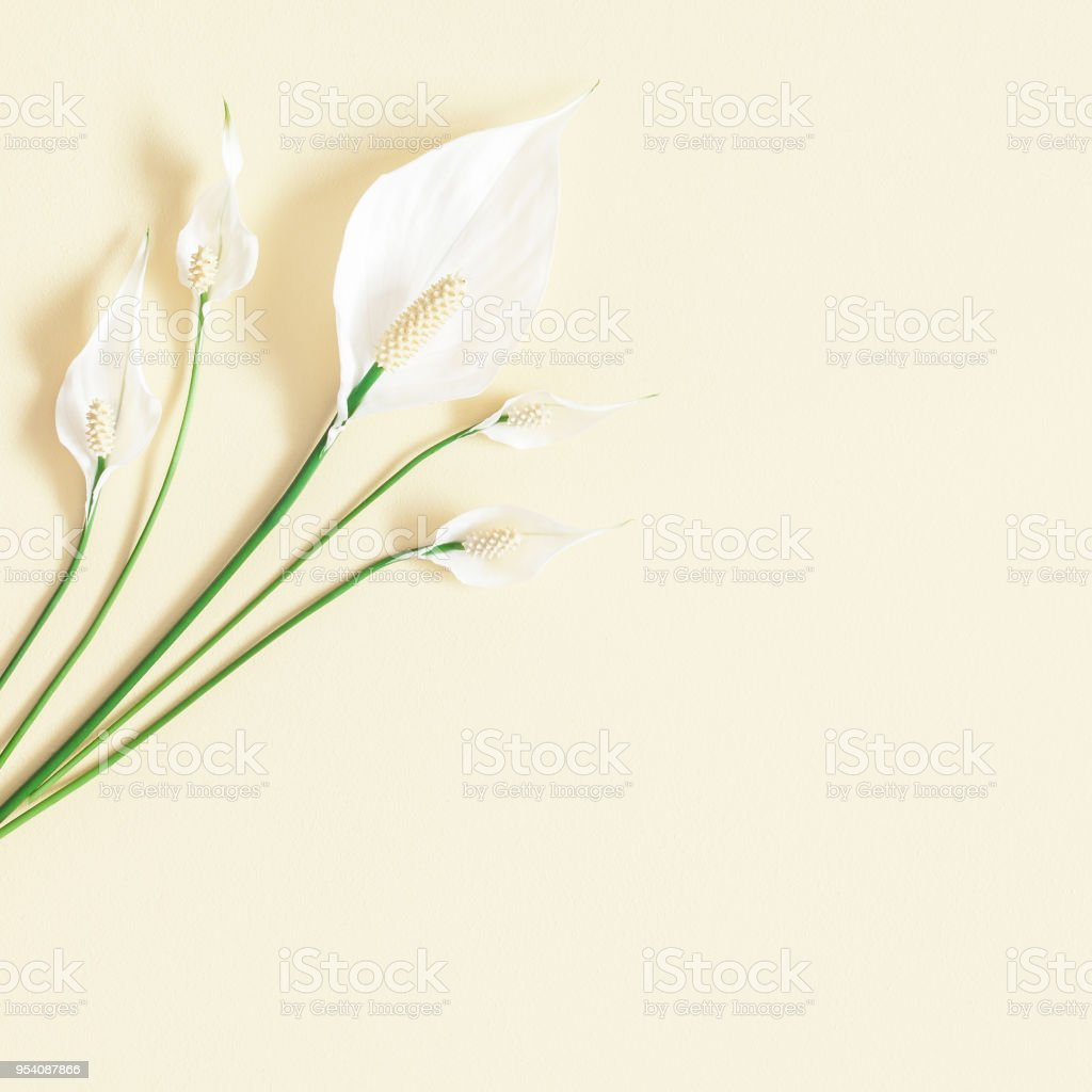 Tropical Flowers On Pastel Yellow Background Flat Lay Top View Stock
