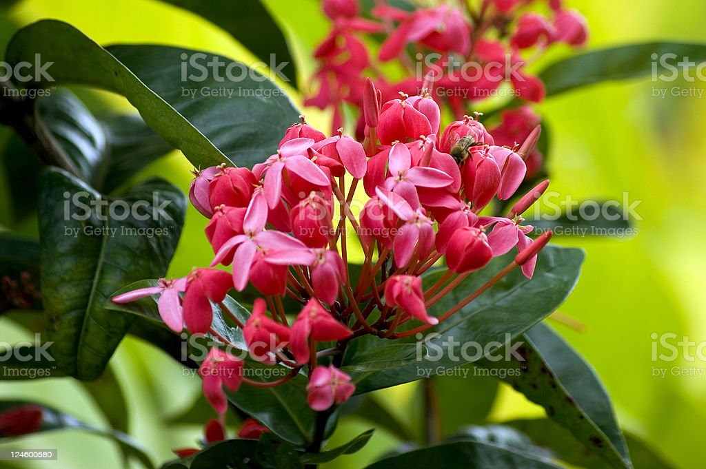 Tropical Flowers stock photo