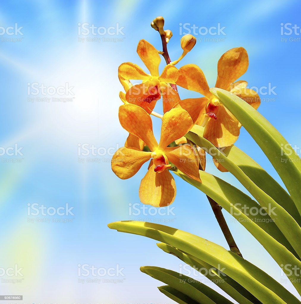 tropical flowers royalty-free stock photo