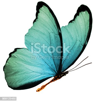 999676880 istock photo tropical  flying butterfly isolated on white background 959125450