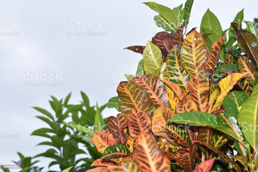 Tropical Foliage royalty-free stock photo