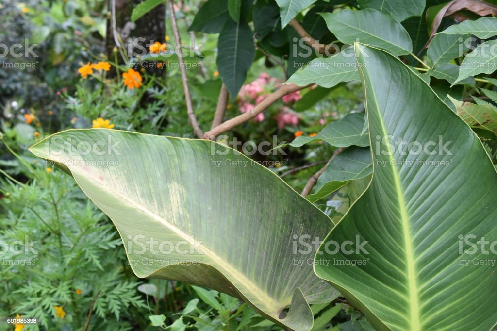 Tropical Foliage royalty-free stock photo