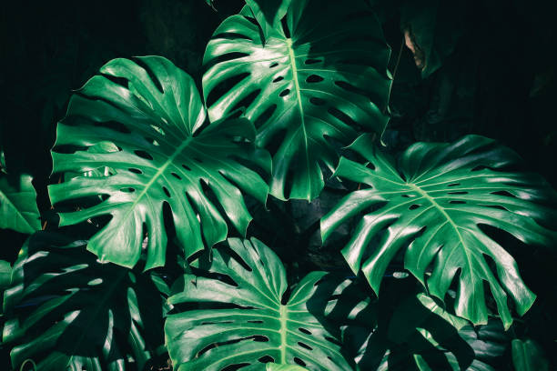 tropical foliage - foliate pattern stock photos and pictures