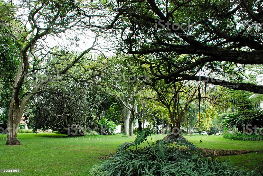 Tropical Forest and green lawns in Gardens Gisenyi Rwanda stock photo