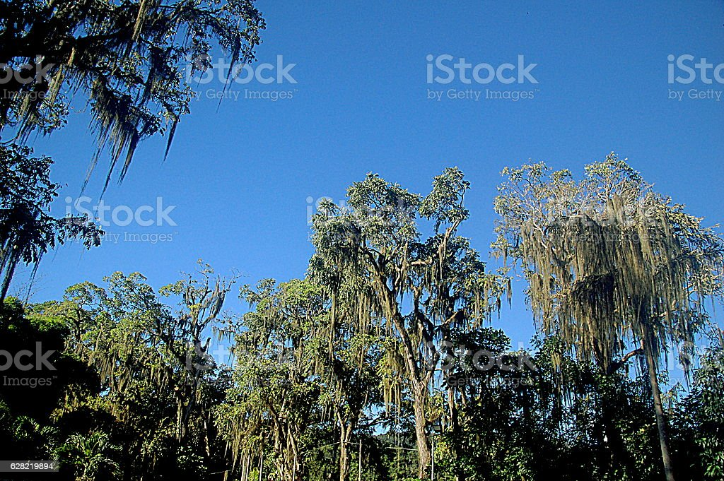 Tropical Forest Canopy royalty-free stock photo & Tropical Forest Canopy stock photo | iStock