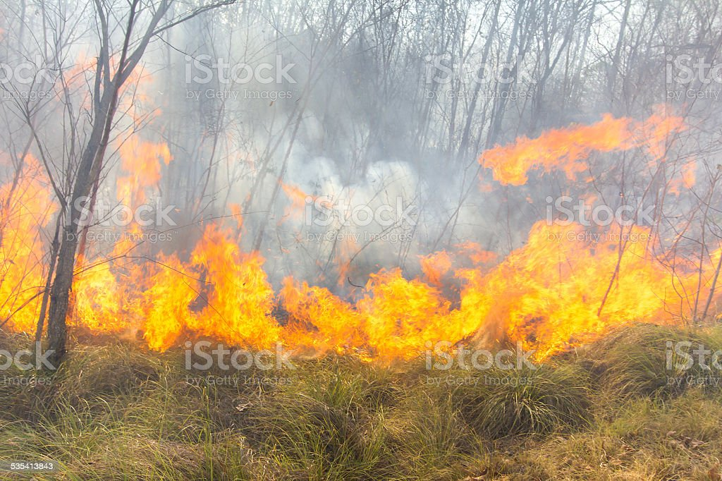 Tropical forest fire stock photo