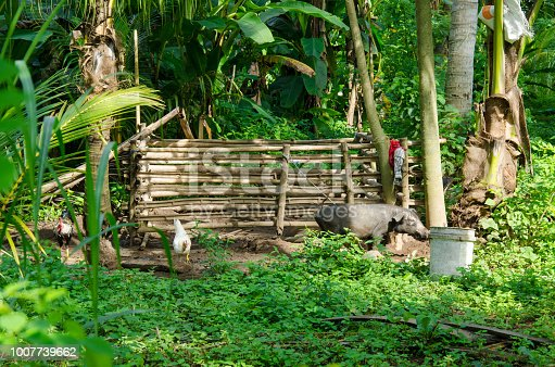Tropical forest - hut of poor people, living in the jungle
