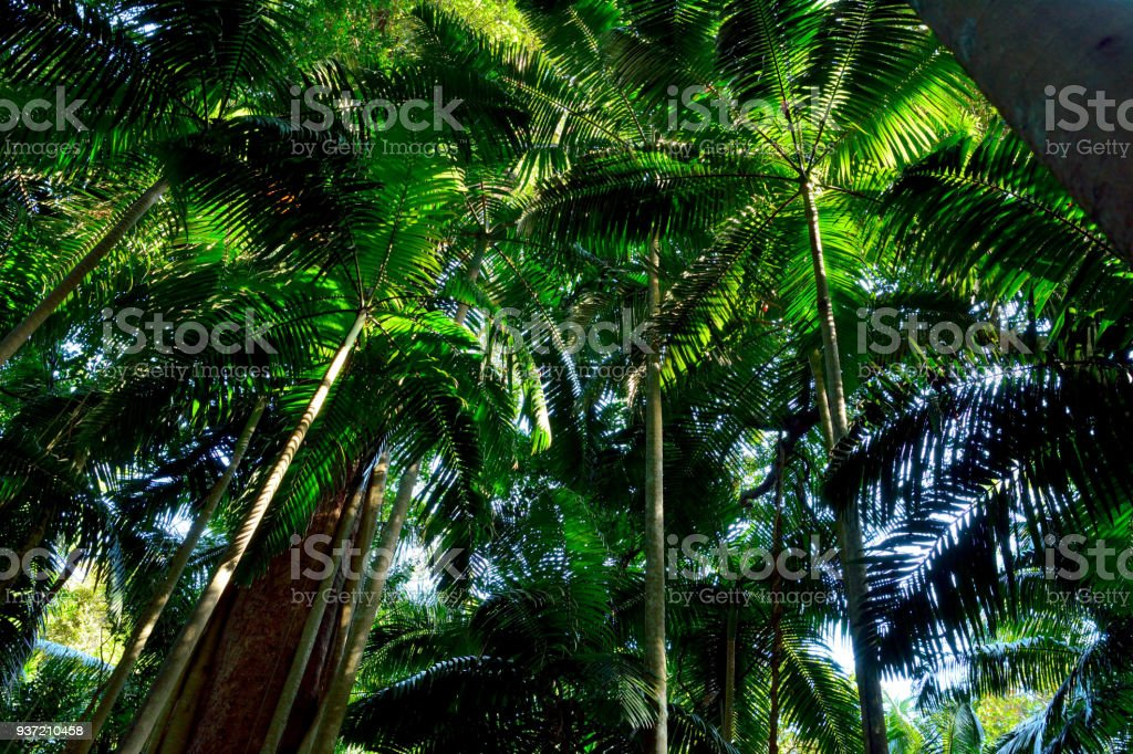 Tropical forest in Lamington National Park, Queensland, Australia. stock photo