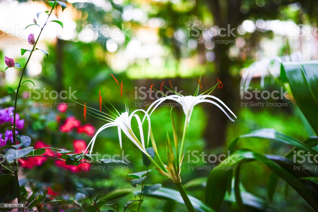 Tropical forest in Thailand photo libre de droits