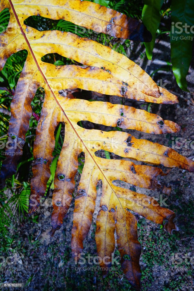 Tropical forest in Thailand royalty-free stock photo