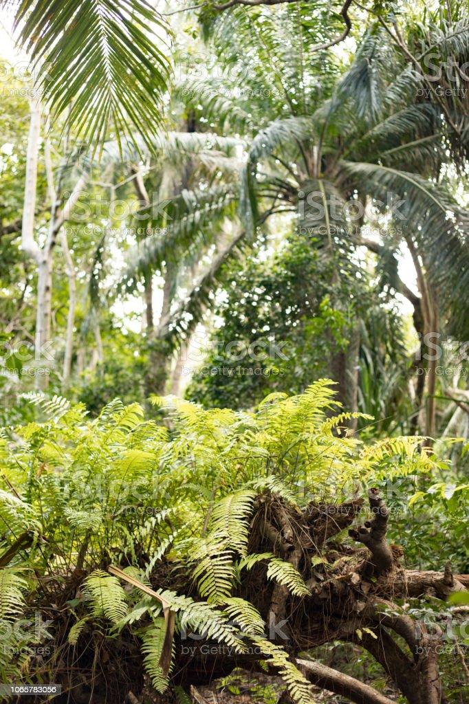 Tropical Forest in Zanzibar stock photo