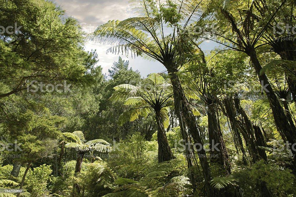 Tropical forest near Hahei stock photo
