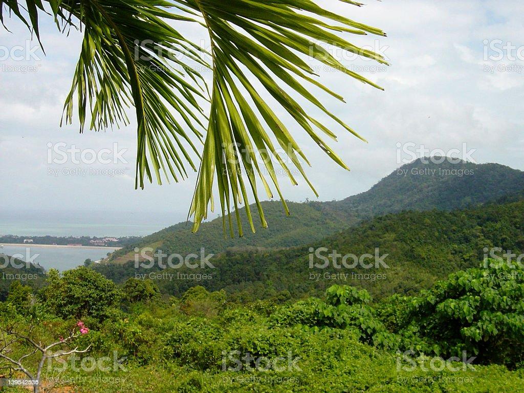 Tropischen Wald – Foto