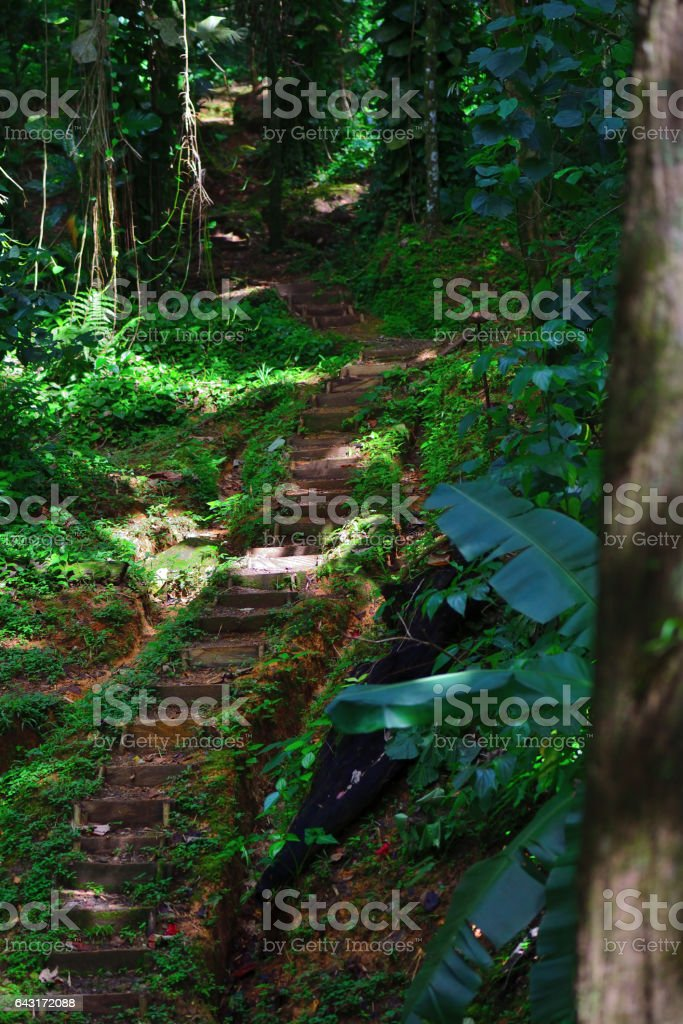 Tropical Forest Trail on Saint Lucia stock photo