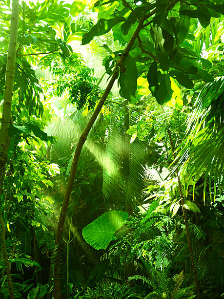 Tropical forest, trees in sunlight and rain stock photo