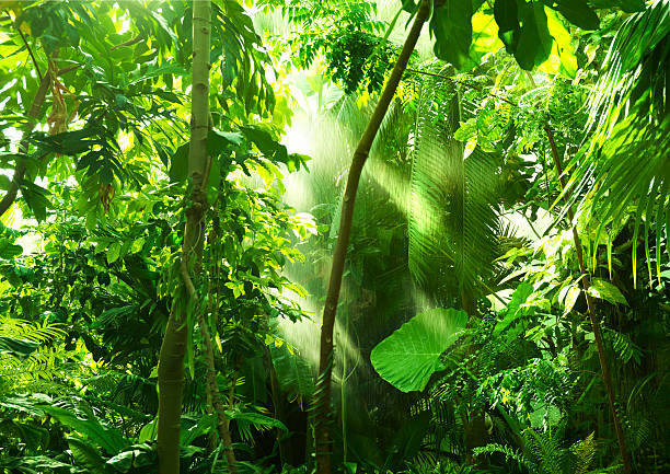 tropical forest, trees in sunlight and rain - regen zon stockfoto's en -beelden