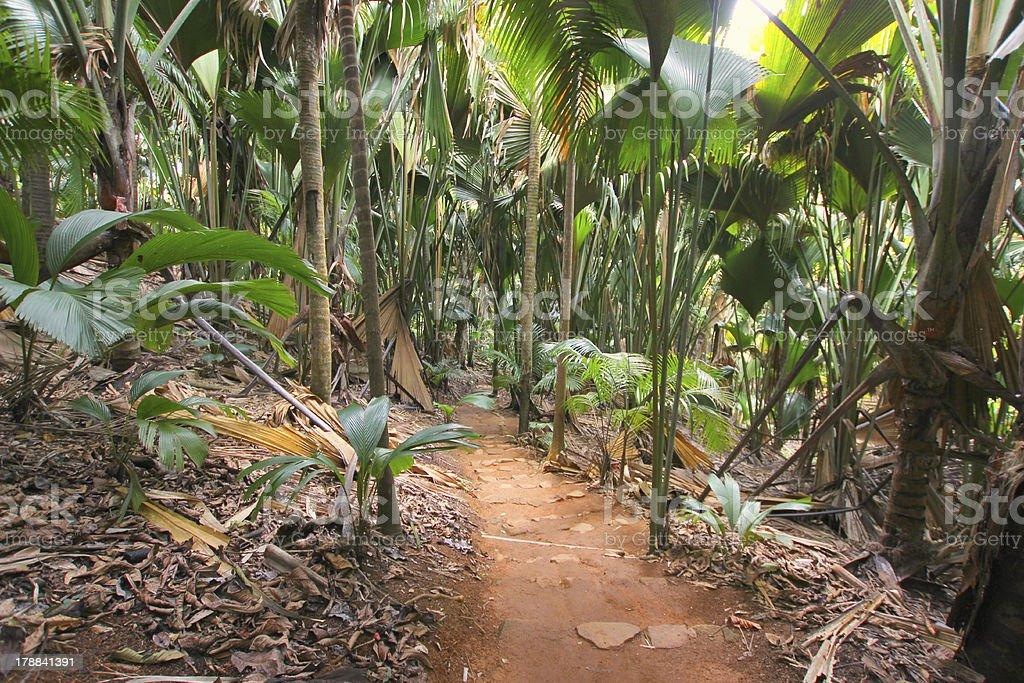 Carta Da Parati Foresta Tropicale : Foresta tropicale vallée de mai isola di praslin seychelles foto