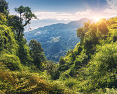 Tropical forest with green trees on the mountain at sunset in summer. Colorful landscape with jungle on the mountains, gold sunlight, blue sky with clouds. Nepal. Travel in Himalayas.Trees in the hill