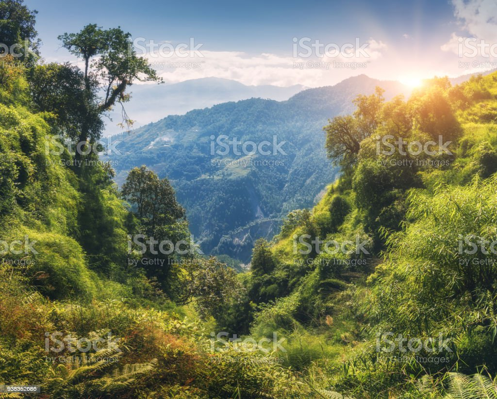 Tropical forest with green trees on the mountain at sunset in summer. Colorful landscape with jungle on the mountains, gold sunlight, blue sky with clouds. Nepal. Travel in Himalayas.Trees in the hill stock photo