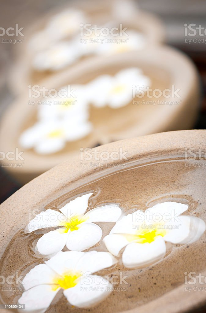 Tropical Frangipani flowers floating in bowls of water royalty-free stock photo