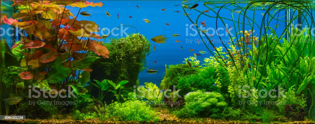 Tropical fresh water aquarium stock photo