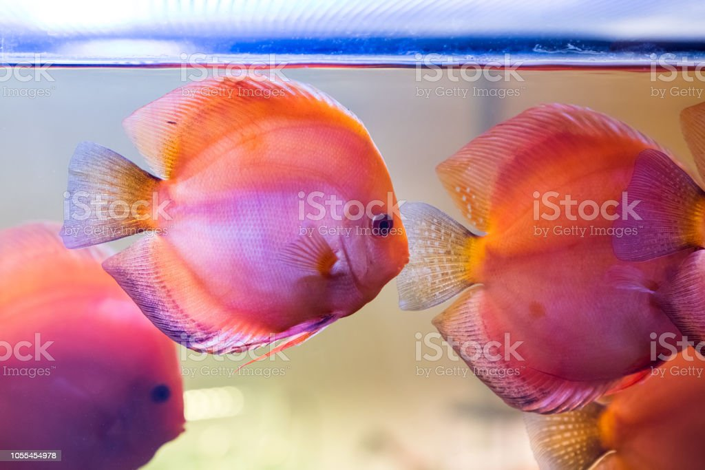 Tropical Freshwater Aquarium With Beautiful Colourful Fish Under