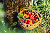 Tropical fruits in a wicker basket at the base of a tree in garden. Many colorful ripe tropical fruits harvested from the farm.