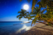 beautiful tropical beach with palm trees by starry blue night with full moon