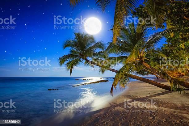 Photo of Tropical Full Moon Night