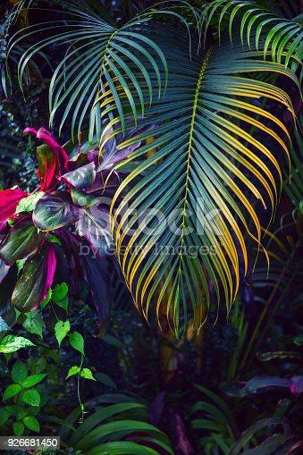 istock Tropical garden background 926681450