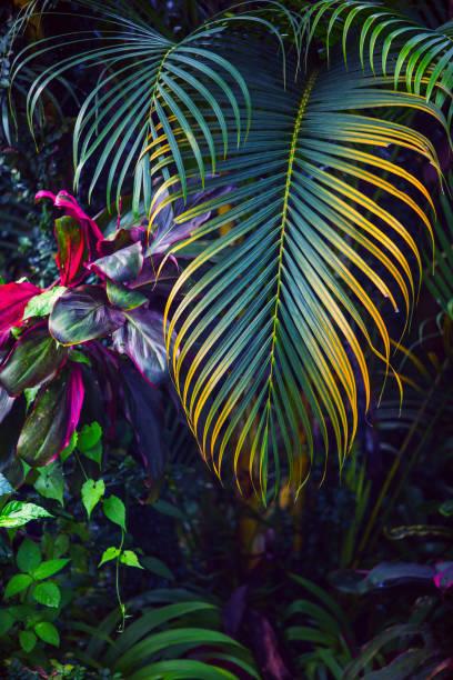 tropischen garten hintergrund - palmengarten stock-fotos und bilder