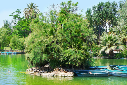 Tropical garden, lake and palms tree